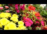 Les Serres de Dallon - Fleuriste à Dallon