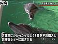 イルカ不法購入、業者がショーに使用 韓国