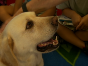 Hooper: Canine Katrina survivor,  kids' therapy dog