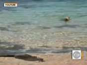 Video shows dog attacking shark in ocean