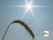 Hay shortage in Texas due to drought