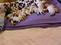 Test video save of puppies - 082410