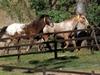 Fourth NSW horse dies from Hendra virus